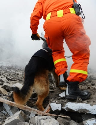 dog searching after earthquake