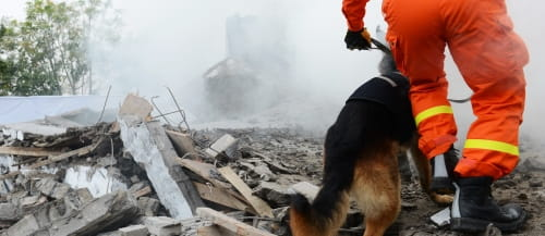 Natural disaster man with dog