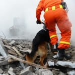 Rescue man and dog natural disaster